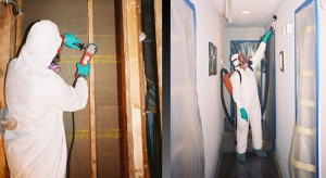 mold remediation site
